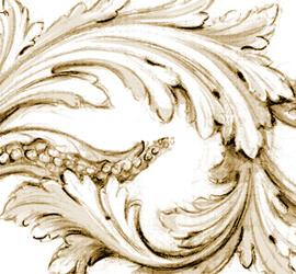Acanthus scroll drawn by Adam Thorpe